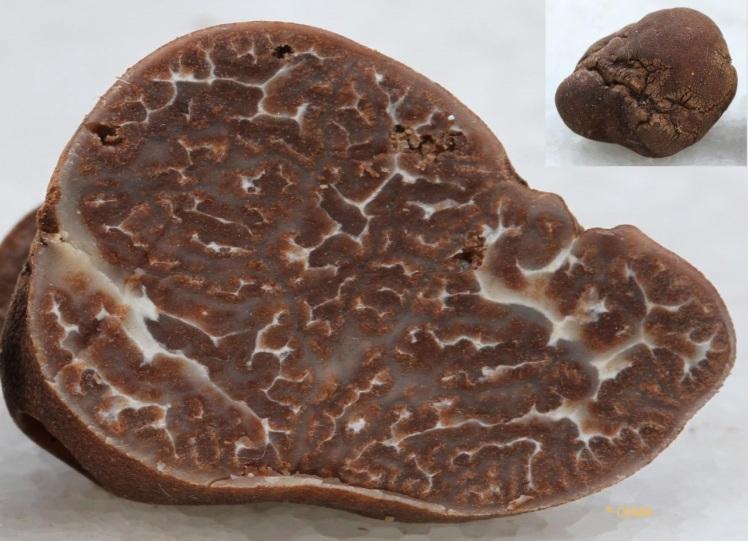image 8 tuber rrufum